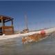 Тигрицы, которые всю жизнь провели в клетке, впервые играют в бассейне!