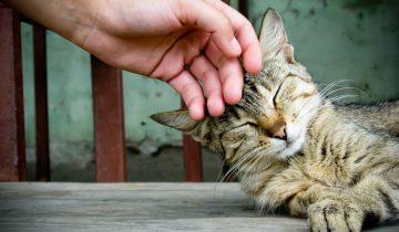 Как правильно гладить котов? Он вас научит!