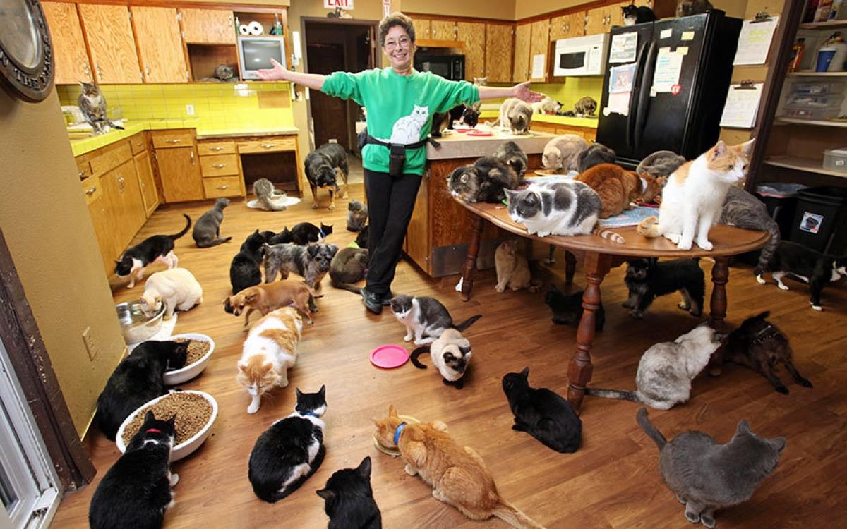 почему хорошо иметь кошку в доме