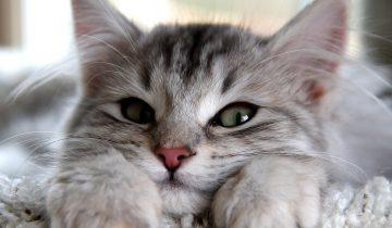 Самый веселый кот в мире!
