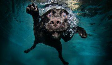 Собака ловит лобстеров. Посмотрите, как она эта делает!