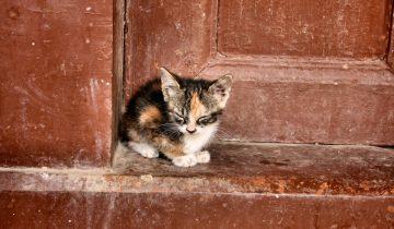Кошка умеет стучаться в дверь