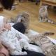 Реакция котят на младенца