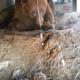Медведь устроил себе берлогу прямо под крыльцом!