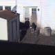 Почему эту собаку отправили на задний двор и не выпускают оттуда?
