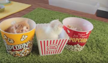 Котята обожают коробочки от попкорна