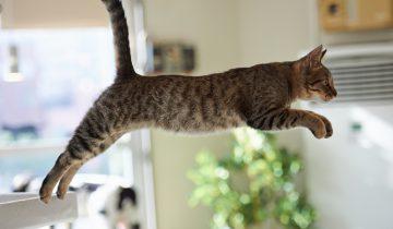 Самые неудачные прыжки котов