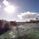 Кошка увлекается серфингом. Я в шоке!