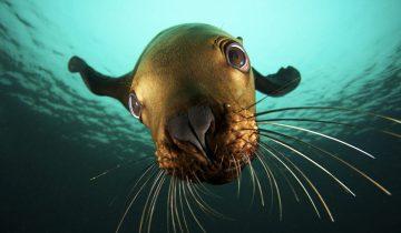 Когда тюлени увидели ведро с рыбой, они начали делать невероятное!