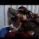 Ленивец пристал к бедной кошке!