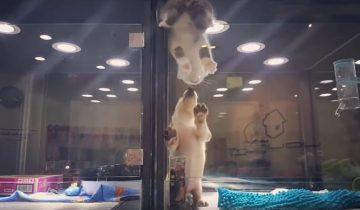 Щенок помогает своему другу