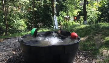 Такода принимает ванну!