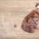Птичка свила гнездо на шерсти старой собаки