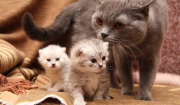 Мама-кошка прячет своих котят