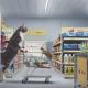 Кошки забрались в супермаркет. Лучшая реклама про котов!