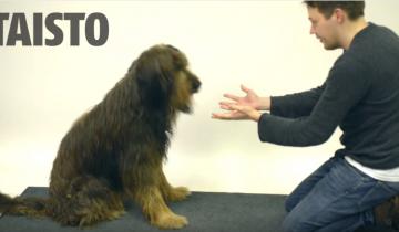 Когда этой собаке показали фокус, она очень расстроилась!