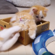 Играющие котята – такие лапочки!