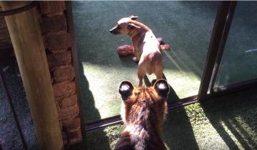 Когда я увидела, с кем эта собака воюет за косточку, я была в шоке!
