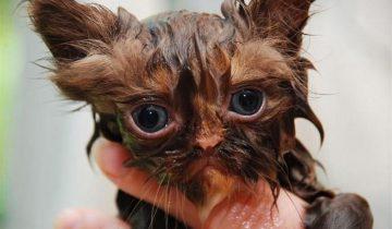 Маленькие котята попали в водосточную трубу. Бедняжки!