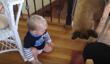 Собака украла у ребенка вкусняшку!