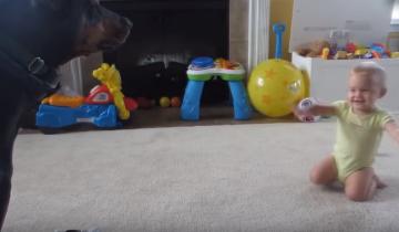 Собака нашла общий язык с маленьким ребенком!
