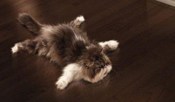 Кошка обожает скользить по полу!
