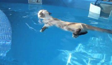 Кот толкнул своего приятеля воду