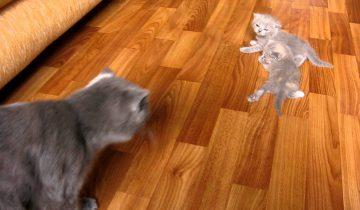 Котята учатся ходить. Самое мимишное видео!