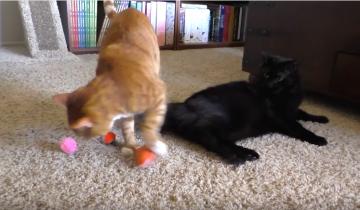 5 полезных лайф-хаков для владельцев кошек!