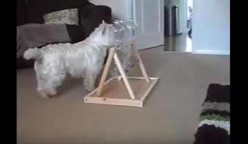 Самая оригинальная кормушка для собак