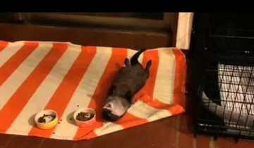 Ленивая выдра показала всем, как нужно отдыхать