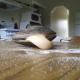 Моллюск кушает соль