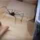 Вы все еще думаете, что пауки – это пугающие насекомые?