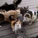 Эти кошки проголодались, посмотрите, что они сделали!