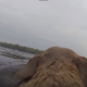 Собака плывет с невероятной скоростью! Съемка на экшн камеру.