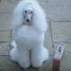 В дверь позвонили, на пороге стояла подружка его пса!