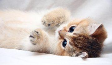 У этого котенка есть собственные телохранители
