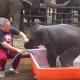 Слон упал в ванну