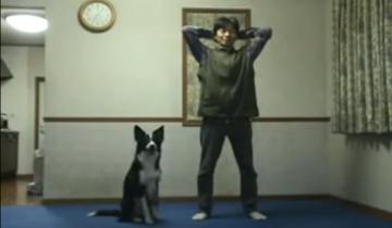 Сообразительный пес выполняет упражнения