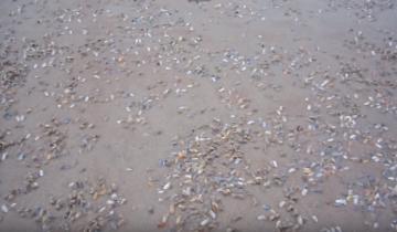Массовое появление мидий. За 5 секунд они наполнили весь пляж!