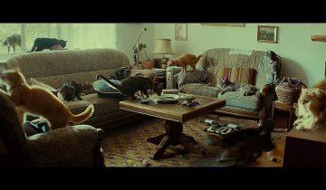 Что делают кошки, когда вас нет дома