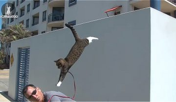 Когда я увидела, что делает эта кошка, я была в шоке!