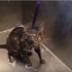 Хозяйка мыла кошку, но вдруг животное что-то попросило