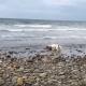 Дельфина выбросило на берег. То, что сделает собака, просто невероятно!