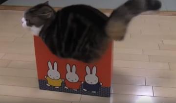 Кошки и коробки. Самая смешная подборка дня