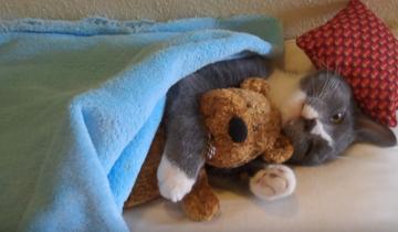 Кошка спит в обнимку с плюшевым мишкой!