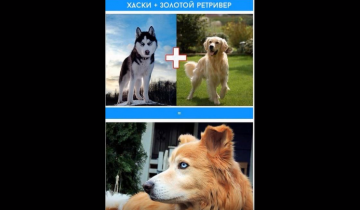 Что будет если смешать разные породы собак?