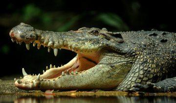 Туристы кормят крокодилов на озере, которое кишит опасными рептилиями