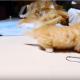 Любопытный котенок породы манчкин забавно атакует диван!