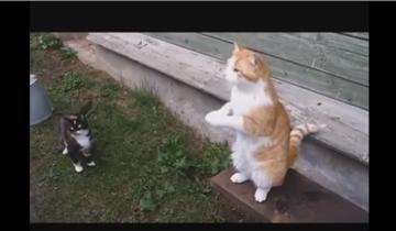 Самые находчивые и смешные коты. Веселая подборка